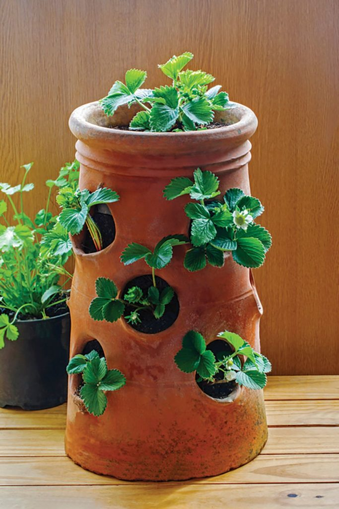 a strawberry pot