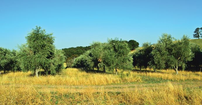 wide shot of bush land with trees