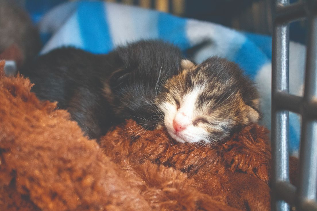 Rspca Act Says Desex Pets As Kitten Season Starts Canberra Weekly