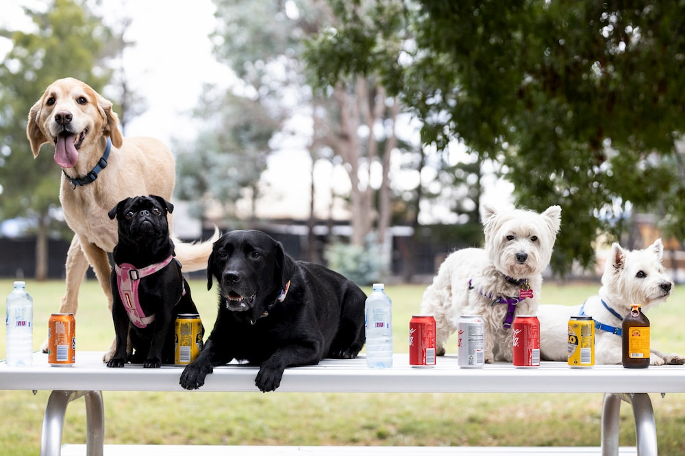 ACT Companion Dog Club