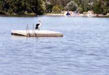 pelican perched on a pontoon floating on a freshwater lake