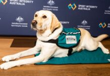 Canberra assistance dog Libby, a Labrador from Integra Service Dogs Australia
