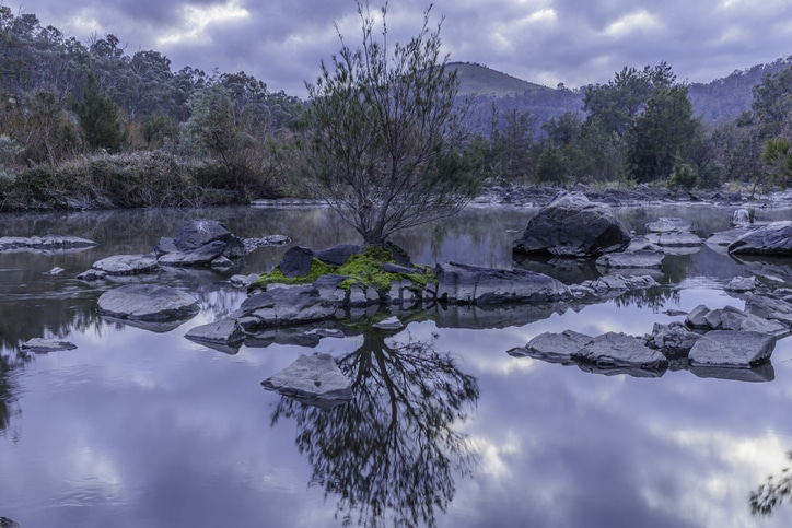 ree growing on a mossy rock in the Murrumbidgee River at Kambah Pool, ACT, Australia on a winter morning in June 2020