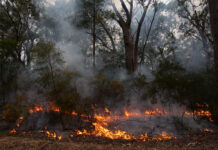 small controlled burn of Australian bushland